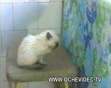 子猫 チキンを丸ごとかっぱらい07