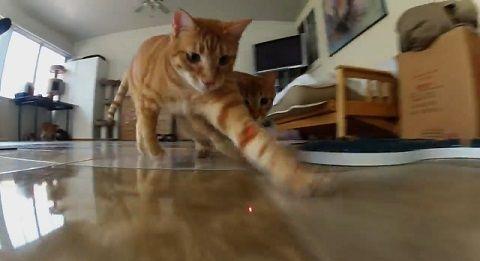 猫 ポインタ視点で追い掛け回される03