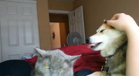 犬猫 私を撫でてよ03