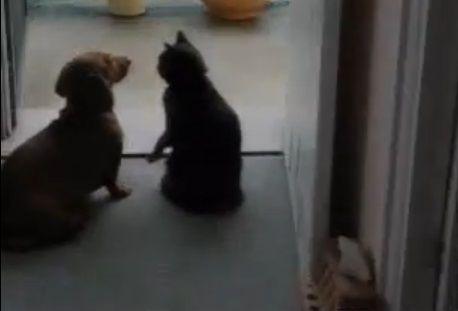 犬猫 ちょっとストップ04