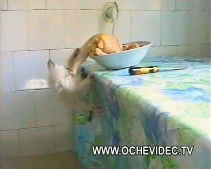 子猫 チキンを丸ごとかっぱらい04