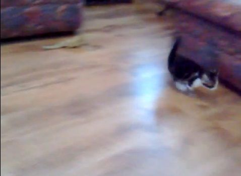 子猫 トカゲ18