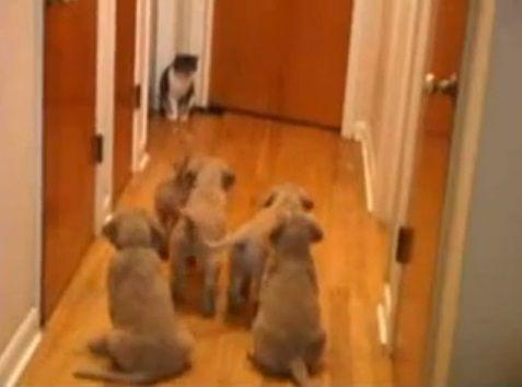 犬猫 複数子犬vs猫00