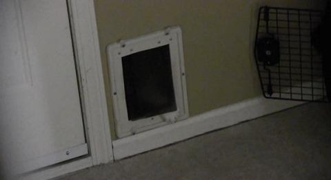 猫 猫用ドアから苦しい01
