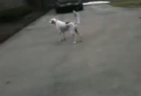 犬 なぜか倒れる00