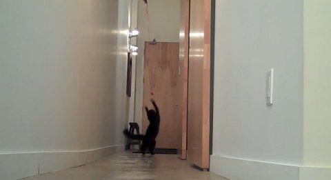 猫 今の風船?04