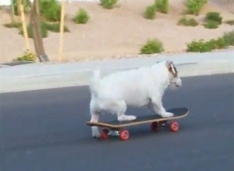 多芸な犬08