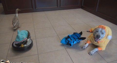 犬猫 ルンバ01