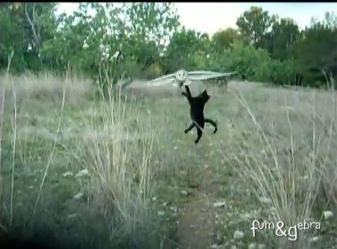 猫 フクロウと仲良し05