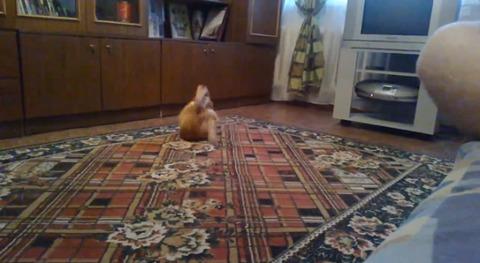猫 ダンゴムシ04