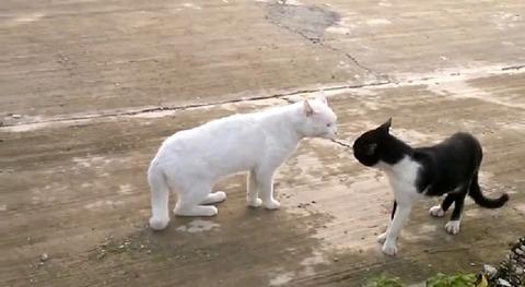 猫 喧嘩で直立01