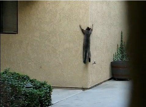 猫 壁をよじ登る05