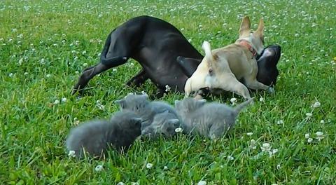 犬猫 チワワブロック10