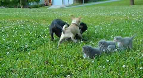 犬猫 チワワブロック09
