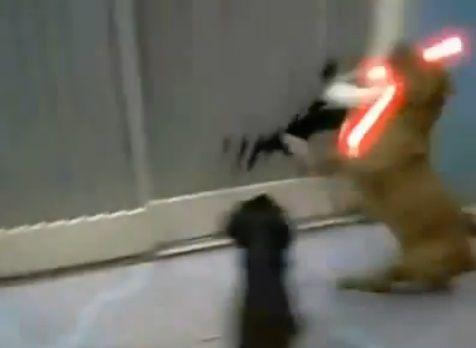 犬猫 sith 06