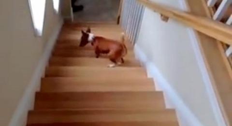 犬 階段は後ろから03