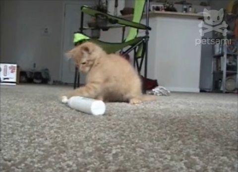 子猫 電動歯ブラシをぺしぺし02