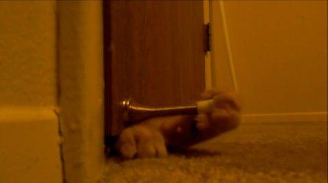 猫 朝5時のクロック03
