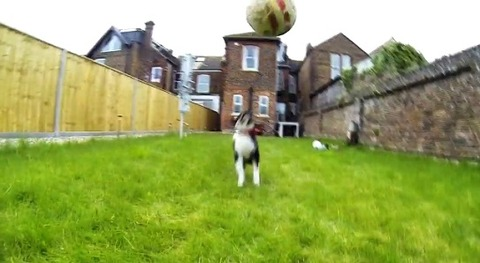 子犬 ボールにアタック・・・00