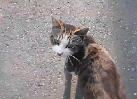 猫 懐いてついてきちゃう野良?02