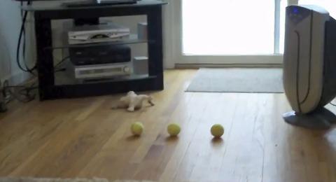 犬 ボール取って01