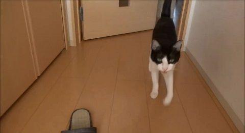 猫 2秒でお出迎え集00