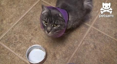 猫 エリザベスカラーにツナ缶が05