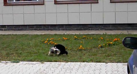 犬猫 ゆっくり近付き、喧嘩!でも犬が04