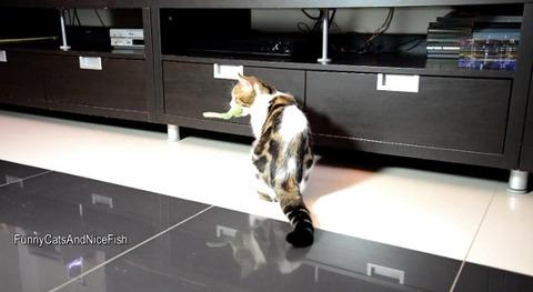 猫 家具の下まで05