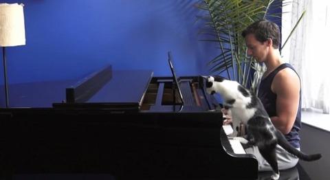 猫 ピアノを一緒に04