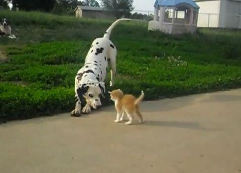 犬猫 その1 07