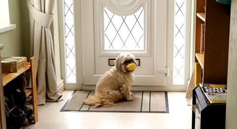 犬 郵便を散らかすシーズー00