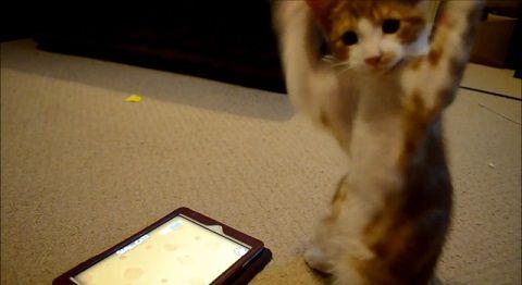 子猫 ipadその2 03