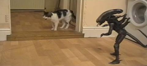 猫 vs Alien04