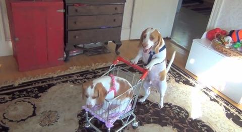犬 ショッピングカートをさまざまな場所で00