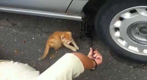 子猫 ジャッキ上げ手伝い04