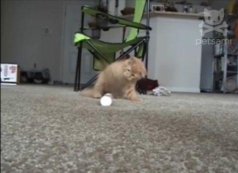 子猫 電動歯ブラシをぺしぺし04