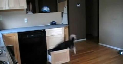 犬 キッチンの引き出しで02