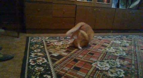 猫 ダンゴムシ02