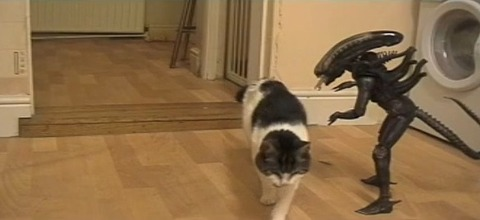 猫 vs Alien07
