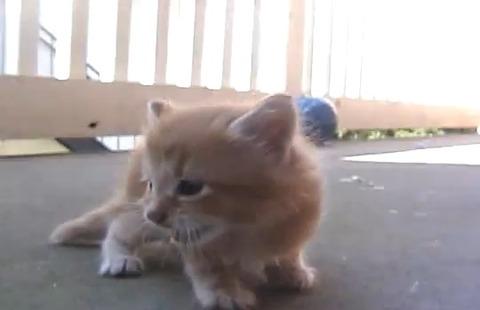 子猫 親猫が連れて行く01