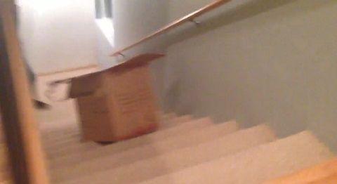 猫 段ボールに入りたい!でもそこは階段!03