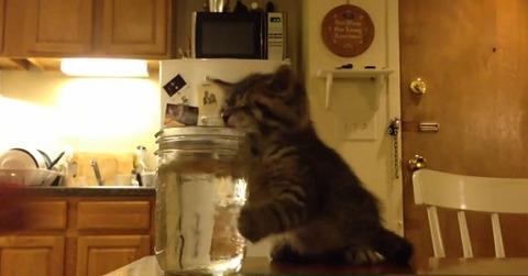 子猫 ウトウトして水に顔が05