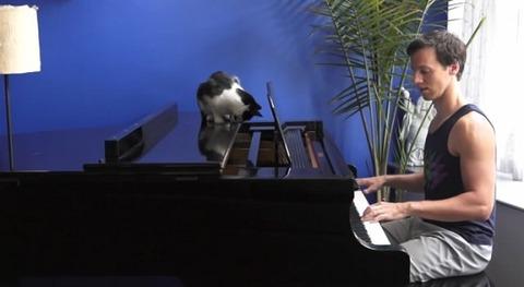 猫 ピアノを一緒に05