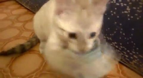 子猫 お金咥え02