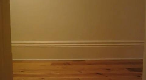 猫 スケボーしている?05