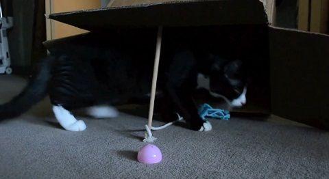 猫 古典的な罠に自ら02