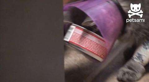 猫 エリザベスカラーにツナ缶が02