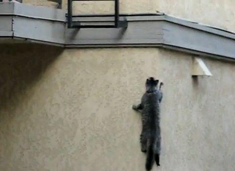 猫 壁をよじ登る06