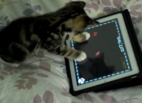 子猫 ipadその1 03